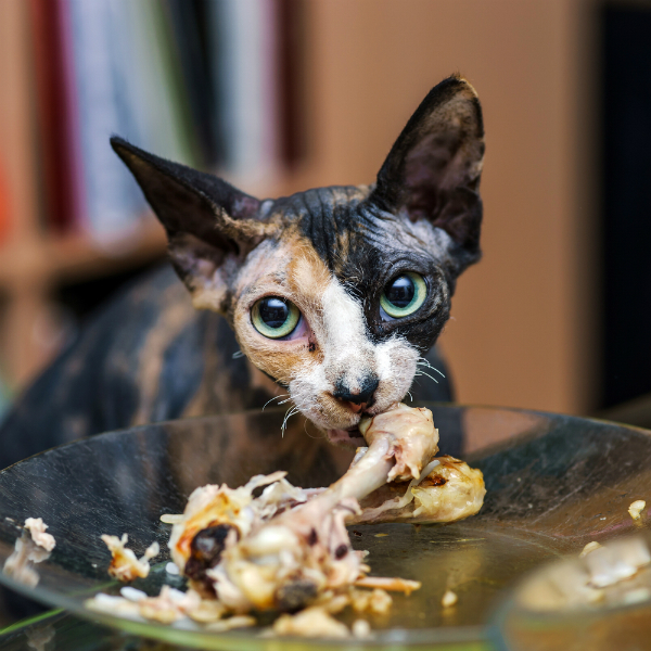 Can My Cat Eat That A Quick Primer On Human Food And Cats