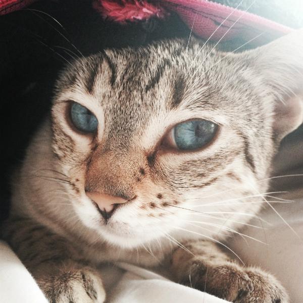 7 Facts About Feline Pancreatitis
