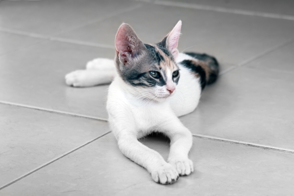 Cat lying on a cold floor.