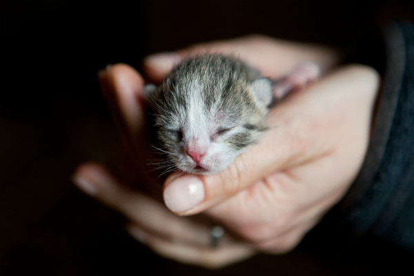 How can you tell how old a newborn kitten is?