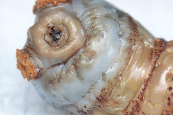 Worms In Cat Diarrhea