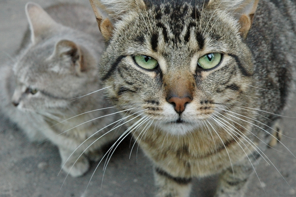 Oy Vey! Israeli Man Divorces Wife Because She Has 550 Cats