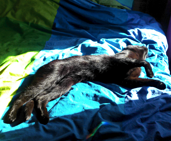 The Science Behind The Fur What Makes Black Cats Black Catster