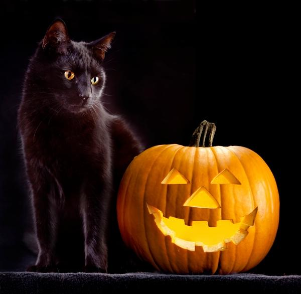 600px-black-cat-and-jack-o-lantern.jpg