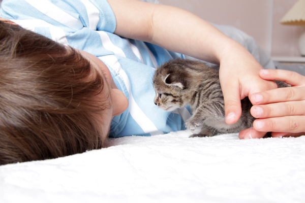 Do You Believe that Fostering Cats Is Good for Children?