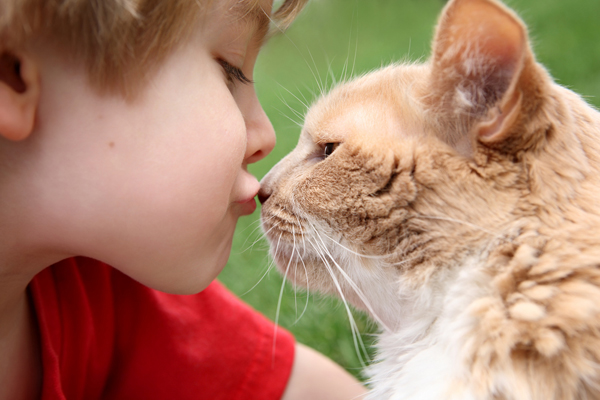 A child kisses a cat on the nose.