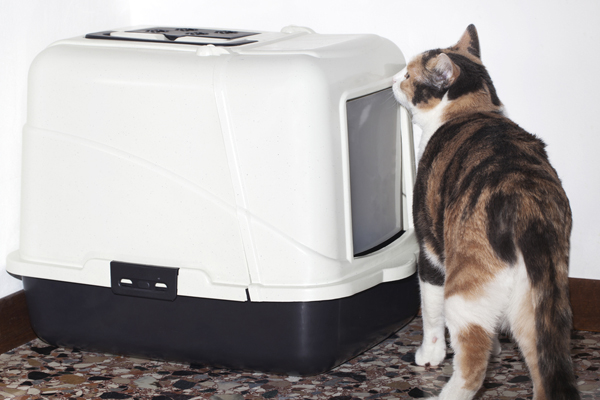 600px-calico-cat-and-covered-litterbox.jpg