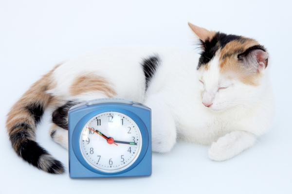 A cat and a clock.