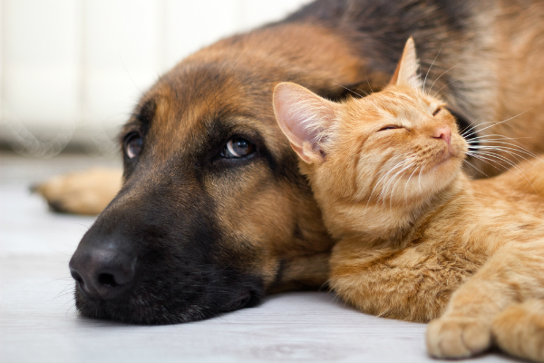 600px-cat-and-dog.jpg