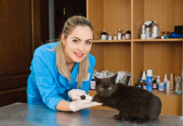 5 Reasons To Consider A Cat Only Veterinary Clinic Catster
