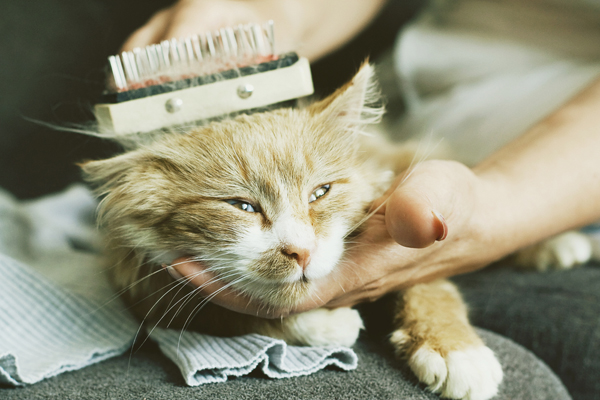 How To Use A Flea Comb On A Long Haired Cat
