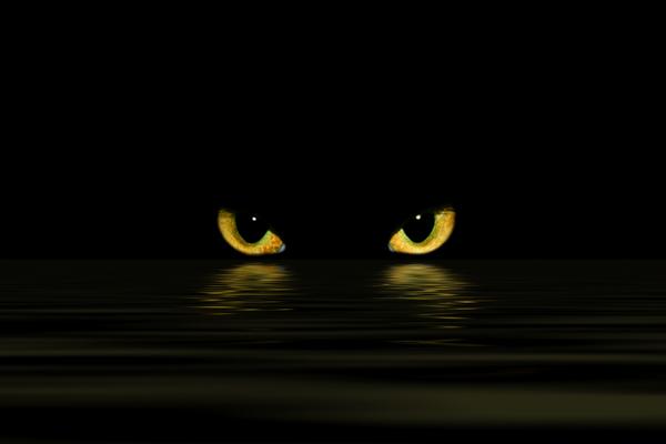 Cat Saw Eye