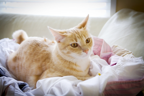 5 Tools for Cleaning Cat Hair Off Furniture and Clothes