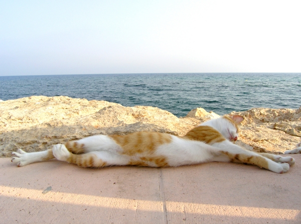 cat stretched out on a beach.