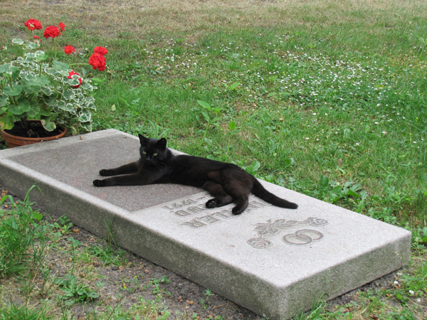 So, Um, Would You Give Your New Cat the Same Name as Your Dead Cat?