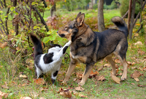 Does dogs & cats get along or can they learn & adapt with ...