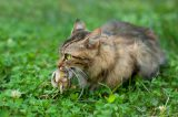 I Am FED UP With Murderous Bird Advocates Who Call for Poisoning Feral Cats!