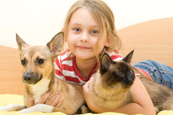 Make Dog And Cat Get Along