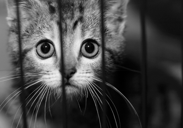 Stop It With the Awful Pictures of Abused Cats Already