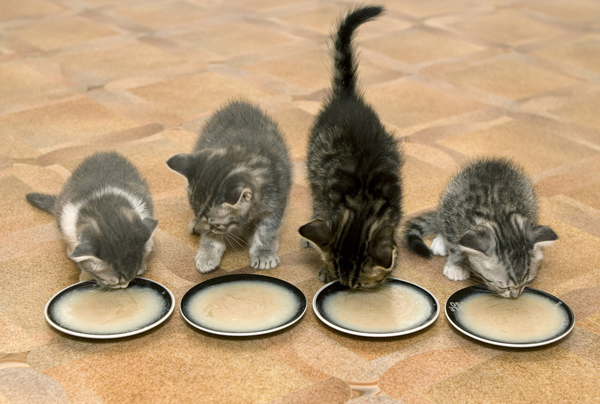 how to know if a kitten isnt eating