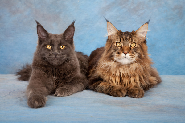 Compare The Cats Of The Black Cat