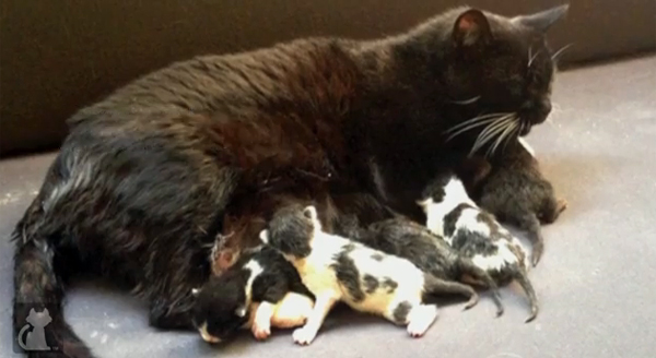On Losing A Litter Of Kittens Do Mother Cats Grieve Catster