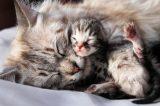 A mom tabby cat and her newborn kitten.