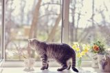 A cat looking out the window.