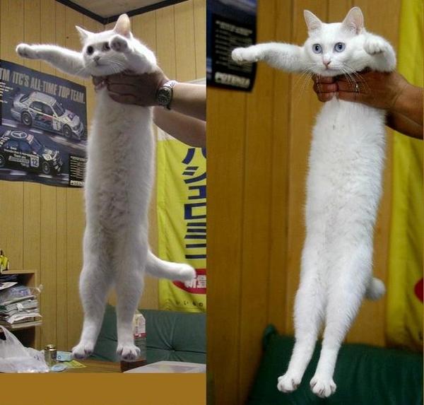 Long Cat Scarf