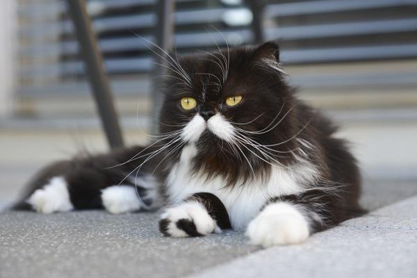 Adopt A Clawless Cat