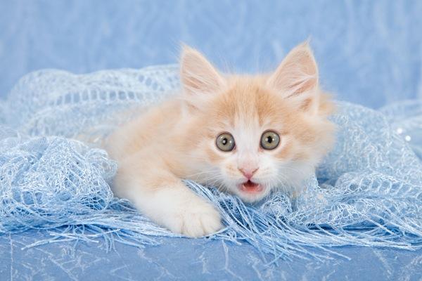 600px-shocked-kitten.jpg