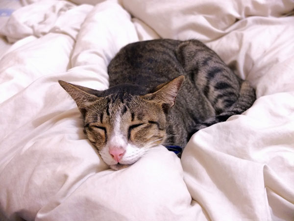 9 things you should know about feline chronic kidney disease catster. Black Bedroom Furniture Sets. Home Design Ideas