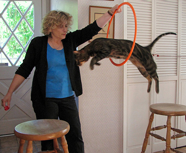 You can clicker train a cat to jump through a hoop!