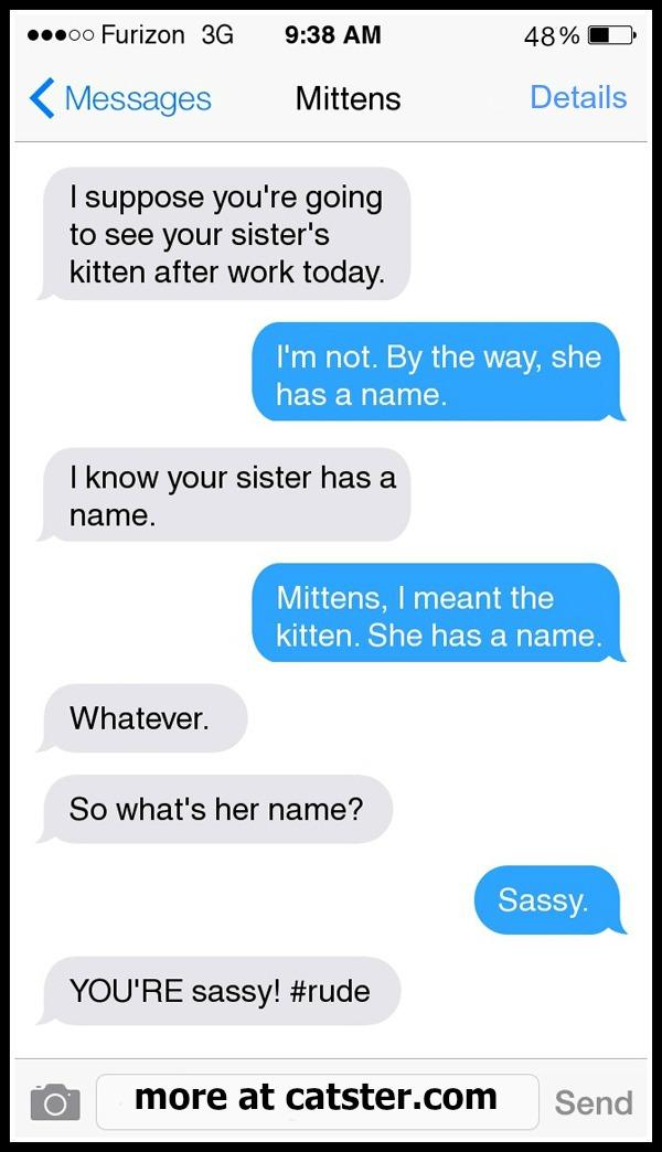 7-kitten 1