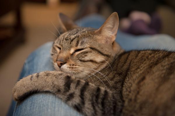 7-perfect-nondescript-cat_0