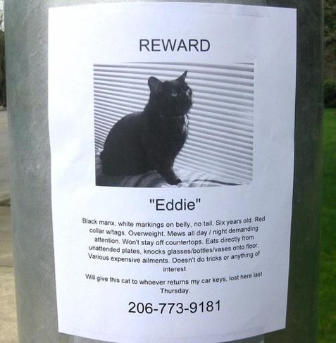 4 lost cat flyers you wont forget