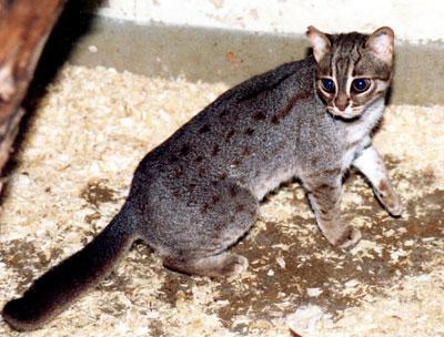 Pristine Cat Food