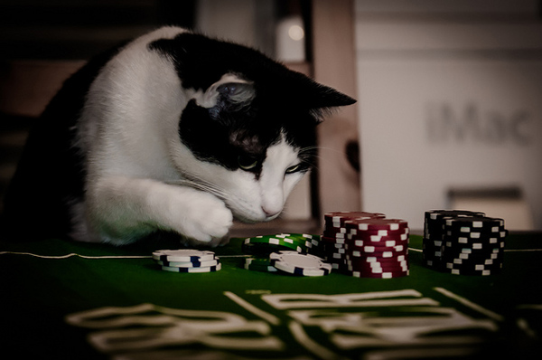 Do You Like Puzzles And Games So Do Cats For Sabotage