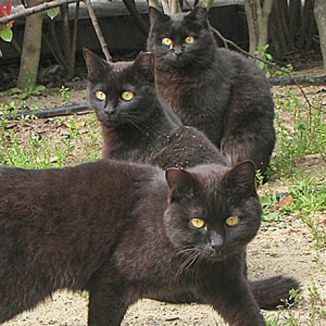 Do Cat Families Have A Hierarchical Structure Catster