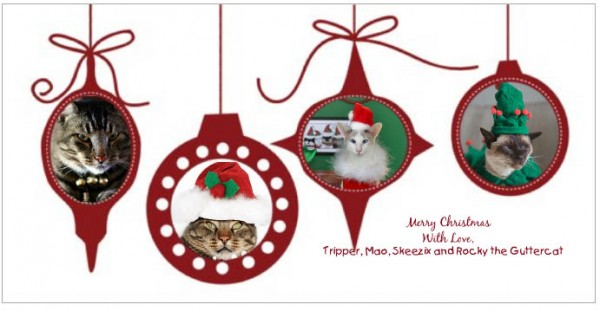 Creating Cat Christmas Cards Selecting A Printing Service Part 3