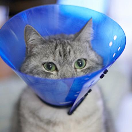 The Five Most Common Feline Physical Ailments Catster