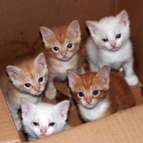kitten health guide  catster