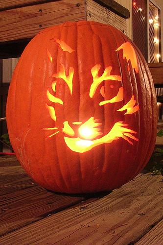 13 Cat Pumpkin Carving Ideas For Halloween Catster