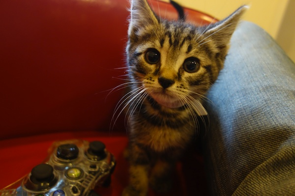 Update New York City Subway Kittens Find A Foster Home