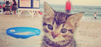 Bringing Your Cat To The Beach