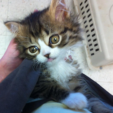 our monday miracle is bug a boo the adorable