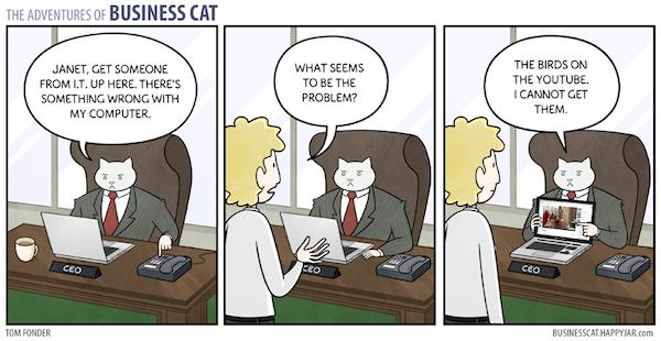 Business Cat Image