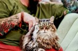 """What I Learned From Binge-Watching """"My Cat from Hell"""""""