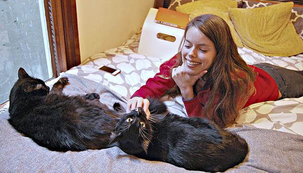 Cat-Dandy-KitTea-Courtney+Cats.jpg