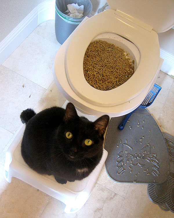 How To Toilet Train Your Cat Catster